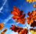 wazektomia na jesieni